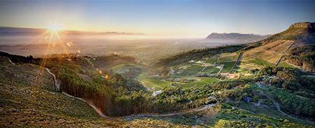 constantia - activities - wine-tasting